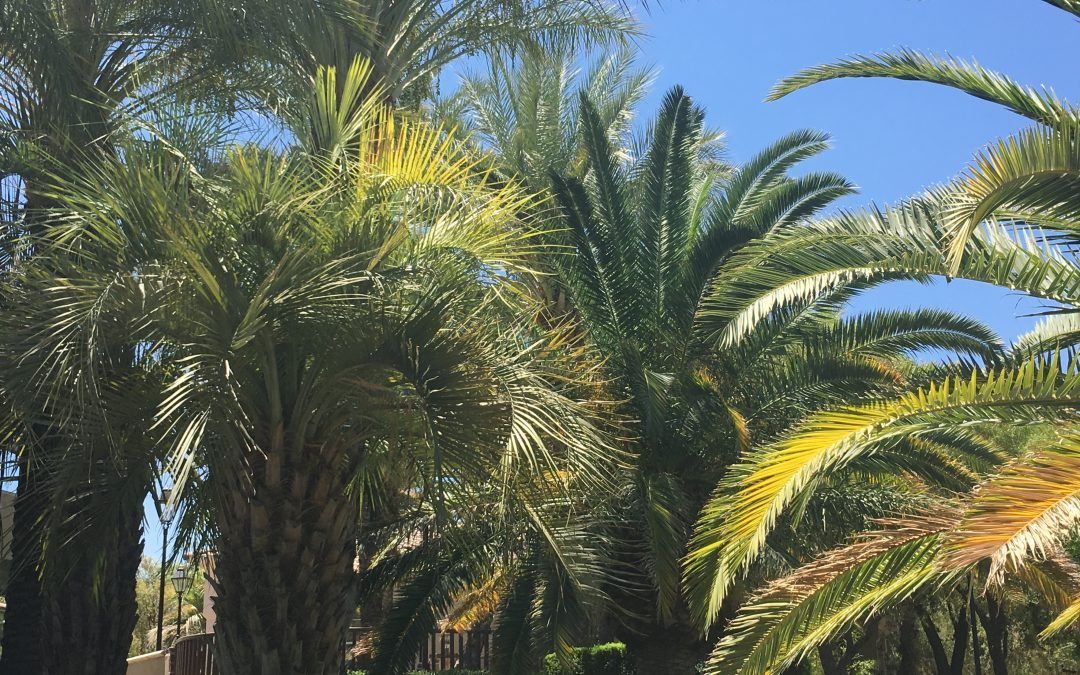 Palm Tree Trimming & Removal in Orange County